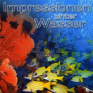 giorgio-moroder-impressionen-unter-wasser-300